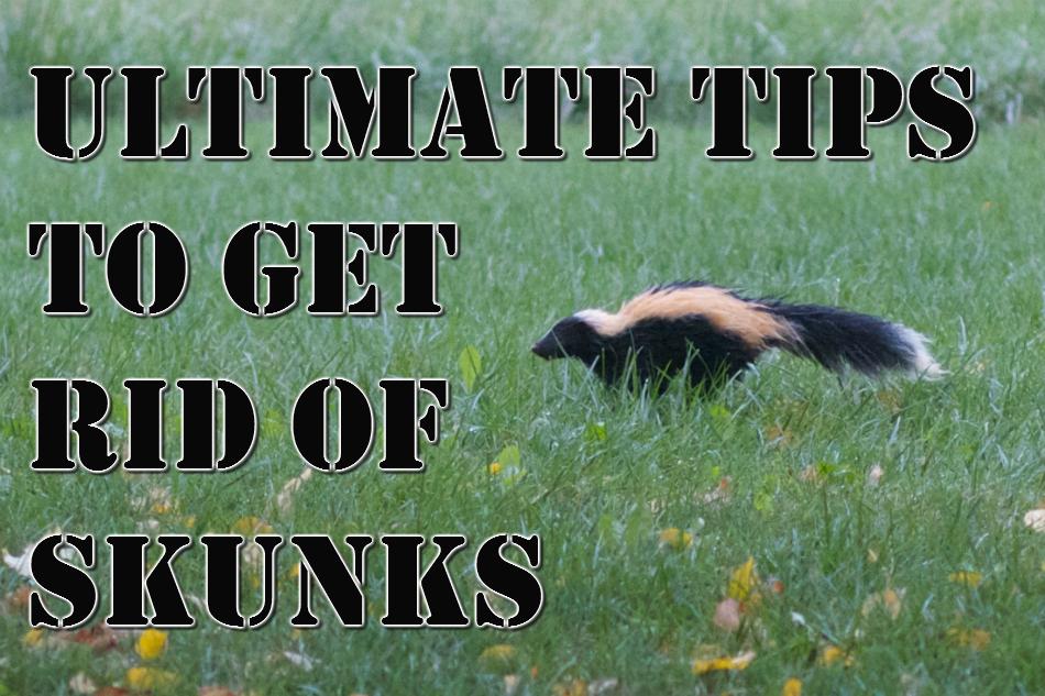 how do i get rid of skunks